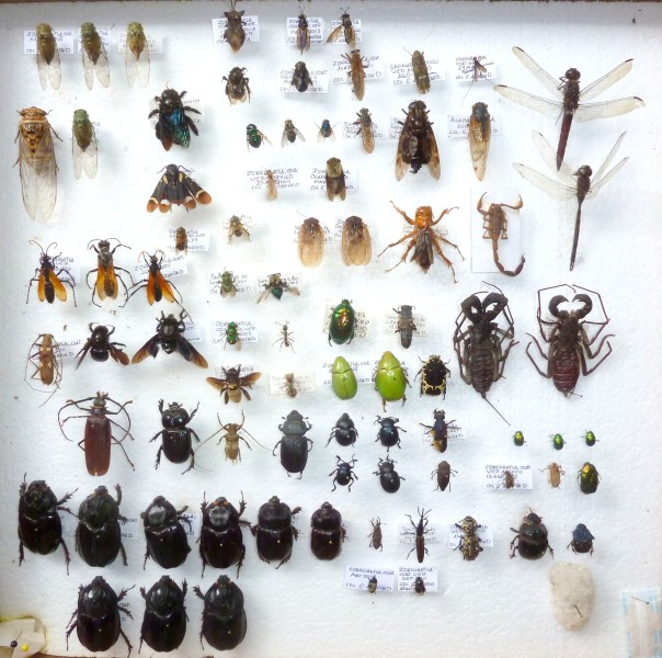 coleccion insectos 2