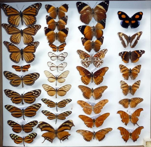coleccion insectos 3