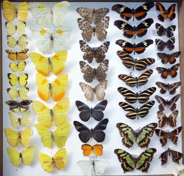 coleccion insectos 4