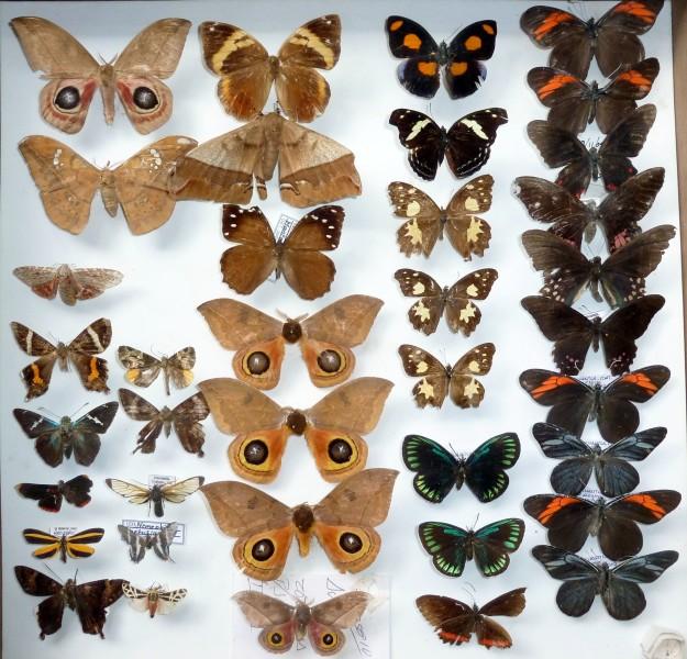 coleccion insectos 5