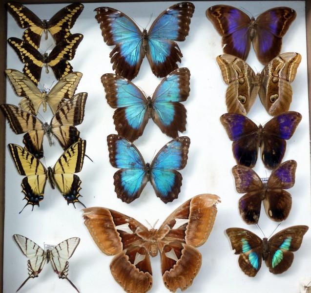 coleccion insectos 6