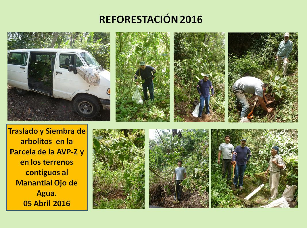 Reforestación 2016-2