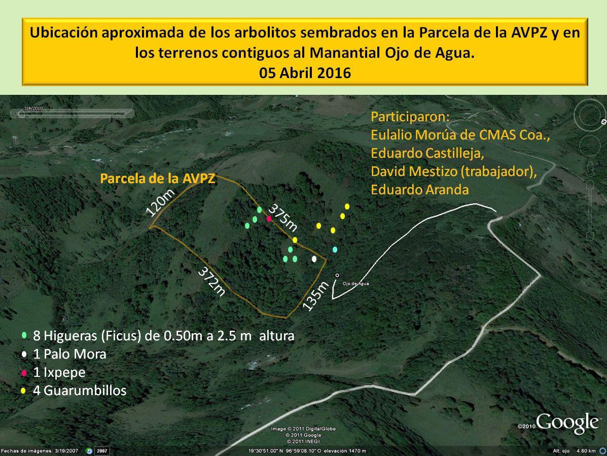 Reforestación 2016